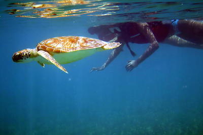St. Thomas Sea Turtle Snorkel Adventure Tour