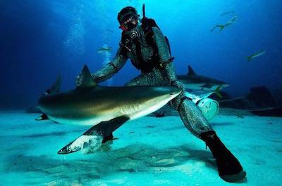 Shark Diving in Freeport