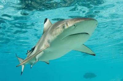 Shark Diving in Nassau