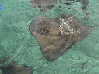 Shark Ray Alley in San Pedro