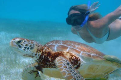 Cozumel Shore Excursion: Akumal Bay and Yal Ku Lagoon Snorkel and Sea Turtle Adventure