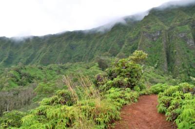 Rainforest Hiking Adventure
