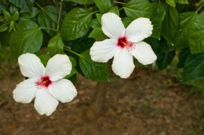 Smithy's Garden in Grenada