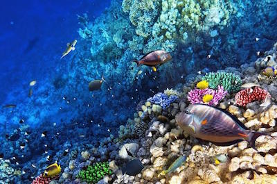 Snorkeling Tours in Roatan
