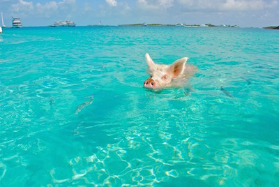 Swimming Pigs Day Away Power Boat Tour from Nassau