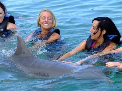Swimming with Dolphins in Cabo San Lucas