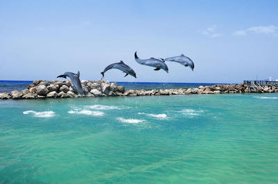 Swim with dolphins in Negril