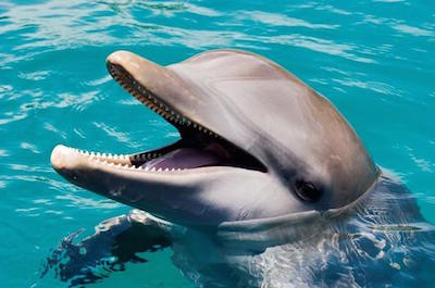 Swimming with dolphins in Puerto Plata