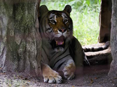 Tampa Big Cat Rescue