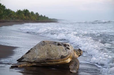 Tortuguero National Park in San Jose