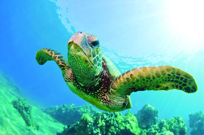 Turtle Canyon Snorkel Cruise by Catamaran in Oahu