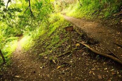 'UALAKA'A TRAIL in Oahu