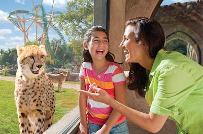 Visit Busch Gardens Tampa Bay