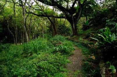 Waimea Valley Trail in Oahu