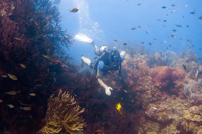 Water Sports  Grenada