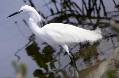 Wild Florida Wildlife Park