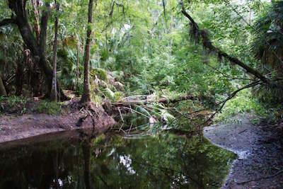 Alafia River State Park in Tampa