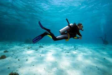 Bermuda Shore Excursion: 2-Tank Certified Scuba Dive