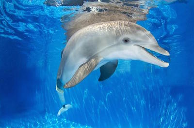 Clearwater Marine Aquarium in Tampa