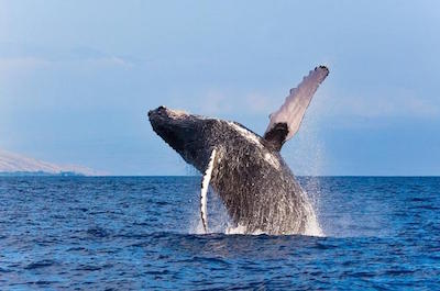 Cruises and Whale Watching