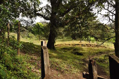 Curi Cancha Reserve in Monteverde