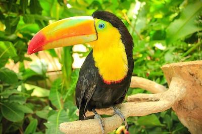 Diamante Eco Adventure Park in Costa Rica