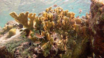 Diving- Snorkeling