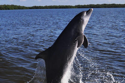 Dolphin and Sealife cruises in fort Myers