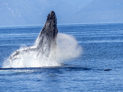 Dolphin and Whale Watching in St. Lucia