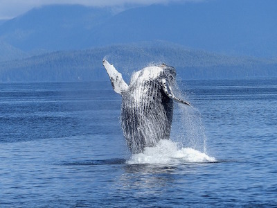 Dolphins and whale watching in Puerto Vallarta