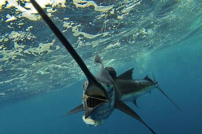 Fishing, Charters & Tours Dominica