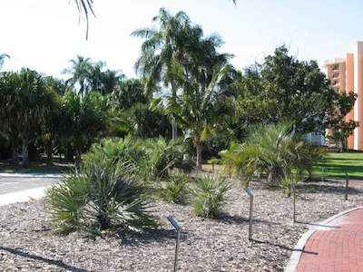 Gizella Kopsick Palm Arboretum in Tampa