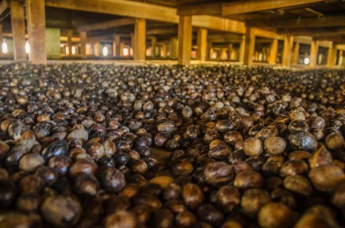 Gouyave Nutmeg Station in Grenada
