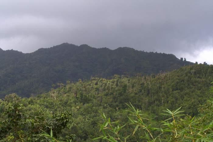 Grand Etang National Park in Grenada