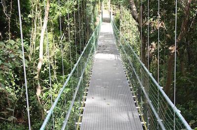 Hanging Bridges Eco Tour and Beach Break in Roatan
