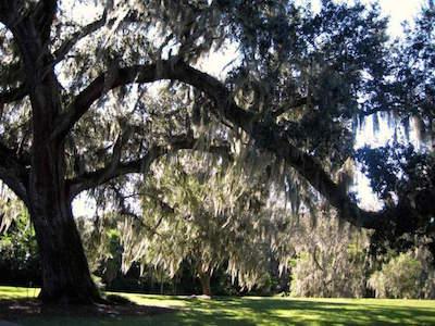 Orlando Harry P. Leu Gardens