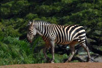 Honolulu Zoo in Honolulu