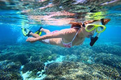 Leeward Coast Dolphin and Snorkel Half-Day Cruise in Oahu