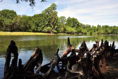 Lettuce Lake Regional Park in Tampa