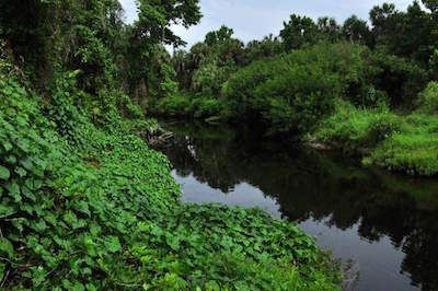 Little Manatee River State Park in Tampa