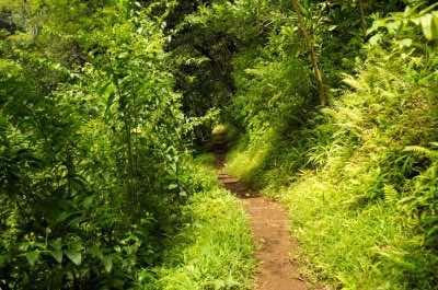 Makiki Valley Trail in Oahu