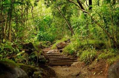 Manoa Falls hike in Oahu