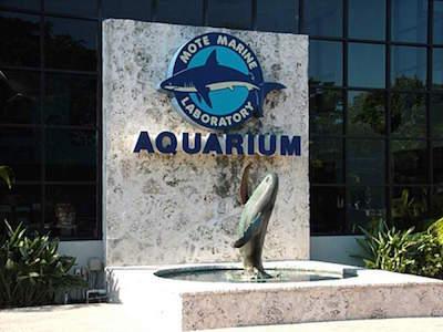 Mote Marine Laboratory and Aquarium in Sarasota