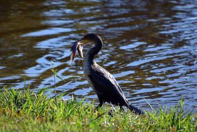 Myakka River State Park in Sarasota