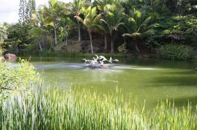 Na Aina Kai Botanical Gardens in Kauai