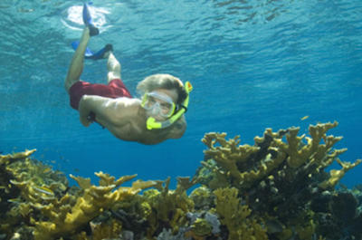 Bahamas Snorkel Adventure