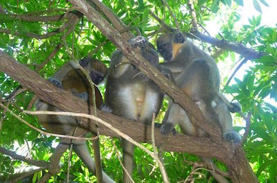 Nature and Wildlife Tours Barbados