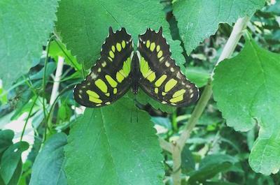 Nature, Wildlife and Birdwatching Tours in Monteverde