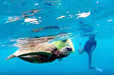 North Shore Turtle Beach Snorkeling Tour in Oahu
