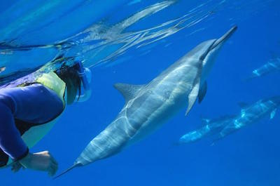 Oahu Snorkel Cruise: Swim With Dolphins and Turtles in the wild in Oahu